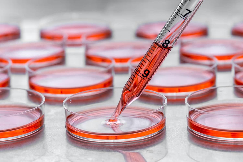stem cell plates